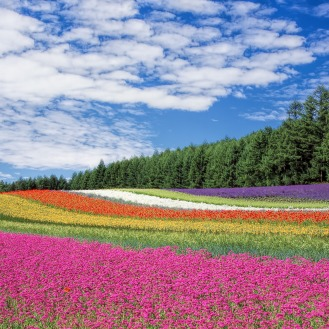 flower-garden-250016